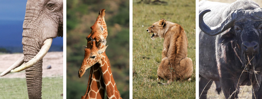 Kenya Photography Safari
