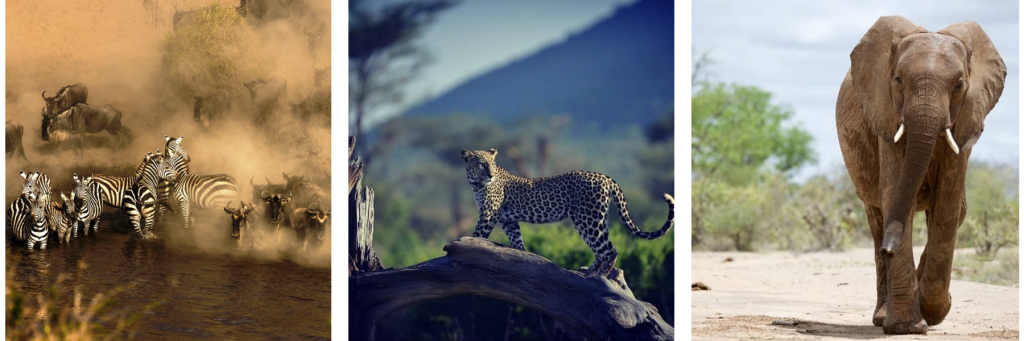 Kenya Photography Tour