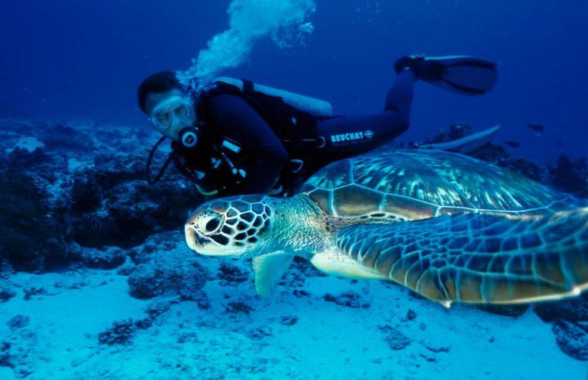 Kenya Beach Snorkeling