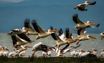 Kenya Birding and Wildlife Safari