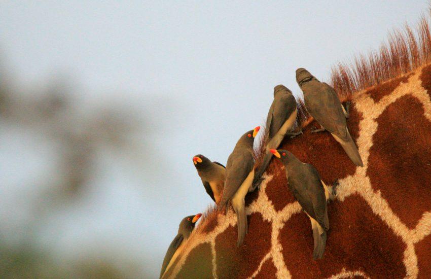 Kenya Birding and Wildlife Safari