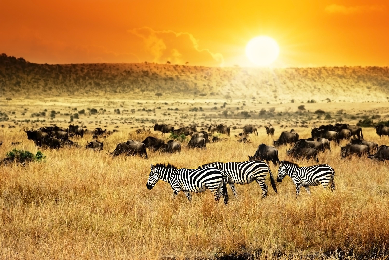 Waterholes, Lakes and Savannahs of Kenya